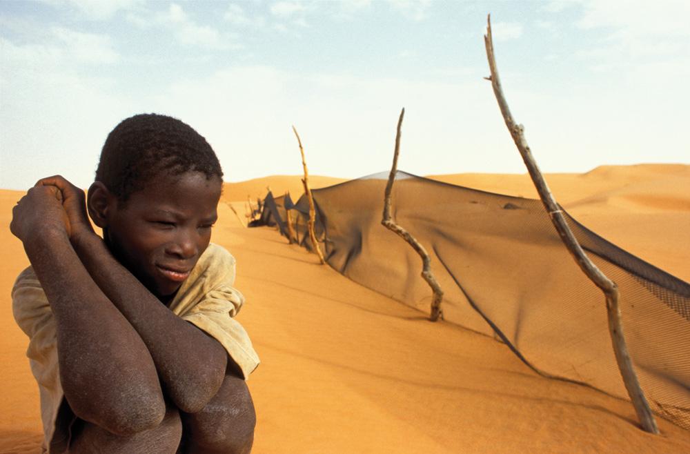 Sahara Desert Food Web Sahara Desert Food Chain