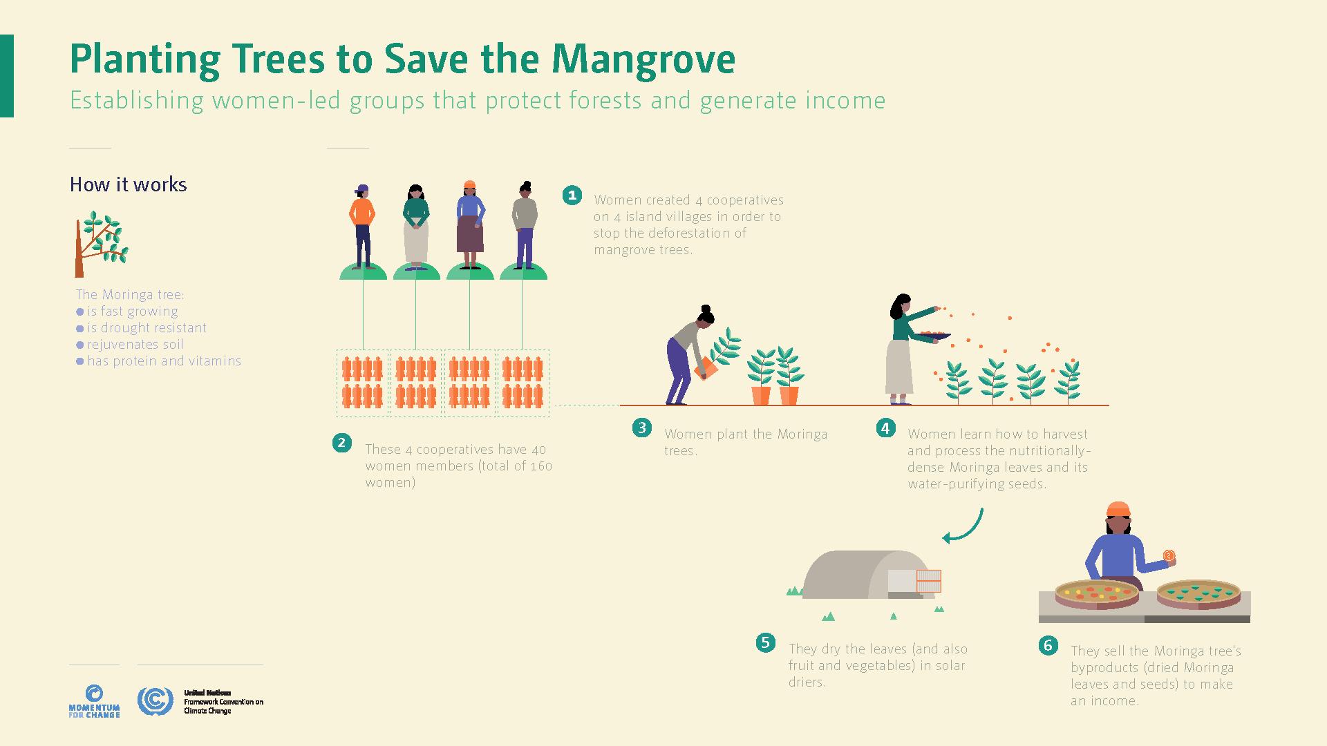mangrove-3.png