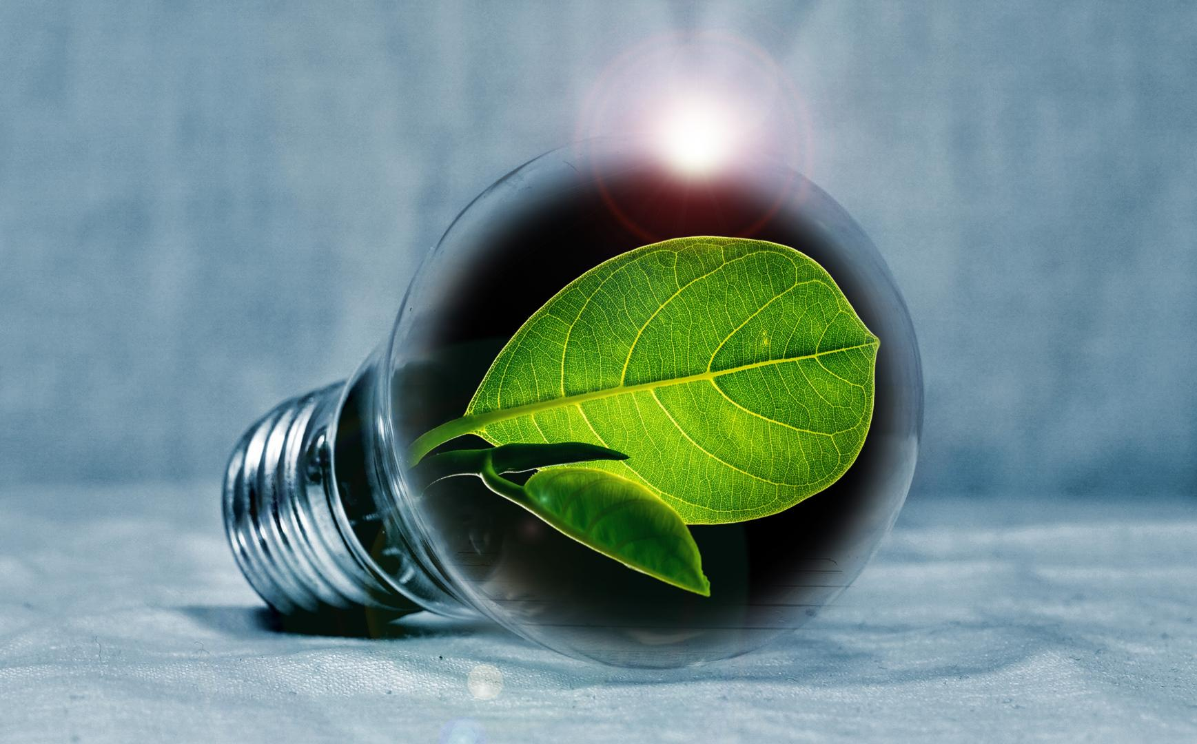Image of a bulb containing green leaves