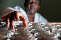 Woman works on soil testing in laboratory
