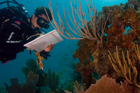 Diver documenting state of coral reef underwater